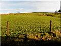 H6794 : Goles Townland by Kenneth  Allen