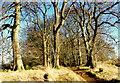 SO9539 : Bredon Hill crest path, 4 by Jonathan Billinger