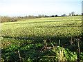 TG3103 : Fields by Rookery Farm by Evelyn Simak