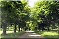 SP1972 : The tree lined drive to Rising Lane by Steve Daniels