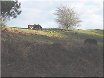 SJ7758 : Ponies on a former railway embankment by Stephen Craven