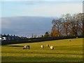 NY6727 : Pasture, Knock, Long Marton by Andrew Smith
