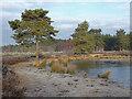 SU9555 : The pond, Pirbight Common by Alan Hunt