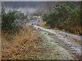 SU9555 : Frozen path, Pirbright Common by Alan Hunt