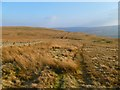 NY8839 : Moorland above St John's Chapel, Stanhope by Andrew Smith
