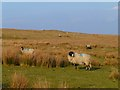 NY8840 : Rough pasture above St John's Chapel, Stanhope by Andrew Smith