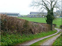 SU6615 : Horsepost Lane approaches Glidden Farm by Shazz