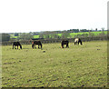 TM1896 : Horses grazing at Redwings Horse Sanctuary by Evelyn Simak