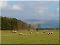 NY5340 : Pasture, Lazonby by Andrew Smith