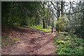 SO9379 : A path junction in the woodland on Nag Hill by Phil Champion