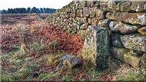 NZ5812 : Boundary Stone, Newton Moor by Mick Garratt