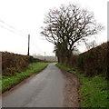 SO5027 : Winter nakedness near Llanwarne by Jaggery