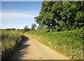 SX4373 : Lane from Devon Great Consols mine by Derek Harper