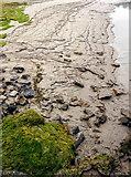 SD4578 : Beach by Arnside Pier by Andy Stephenson