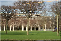 TQ4179 : View of trees in Thames Barrier Park from the Thames Path by Robert Lamb