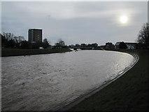 SX9192 : River Exe by Matthew Chadwick