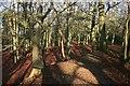 SU5172 : Earth Ramparts, Grimsbury Castle by Des Blenkinsopp
