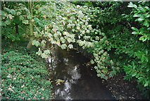 TM2348 : River Lark by N Chadwick