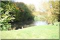 TG0610 : Welborne pond by N Chadwick