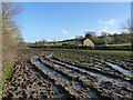 ST5112 : Very horrible muddy field, Milcombe Farm by Becky Williamson