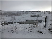 H5173 : Wintry at Killycurragh by Kenneth  Allen