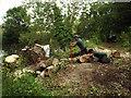 SP2965 : Manhandling cut poplar stems on the riverbank behind Mercia Way, Warwick by Robin Stott