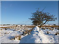 NS8562 : Field boundary near Shottsburn by Alan O'Dowd