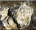 SP4919 : Fossils in Kirtlington Quarry by Des Blenkinsopp