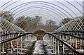 SK6854 : Empty fruit cages at Norwood Park by Graham Hogg