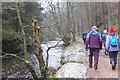 NT2259 : Track by the North Esk, Penicuik Estate by Jim Barton