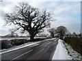 SJ4760 : Gatesheath Lane [2] by Christine Johnstone