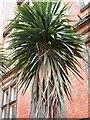 SJ9494 : Municipal palm tree by Gerald England