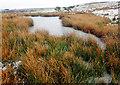 SE8291 : Frozen Dundale Pond by Scott Robinson