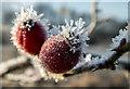 TQ2896 : Hoar Frost on Branch, Trent Park, London N14 by Christine Matthews