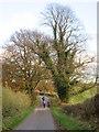 SE9344 : Park  Lane  toward  Dalton  Park by Martin Dawes