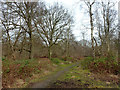 TQ0791 : Path, Bishop's Wood Country Park by Robin Webster
