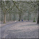 SE2436 : Walking the dogs, Bramley Fall Park by Rich Tea
