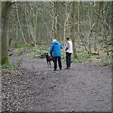 SE2436 : Walking the dog, Toads Hole Woods, Bramley Fall Park by Rich Tea