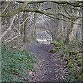 SE2536 : Path to Kirkstall Forge Locks, Bramley Fall Park by Rich Tea