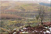 NN0550 : Clear felled area, Glen Creran by Richard Webb