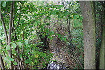 TM2550 : A tributary of the River Lark by N Chadwick