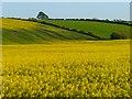 NY0838 : Farmland, Crosscanonby by Andrew Smith