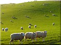 NY0839 : Pasture, Allerby by Andrew Smith