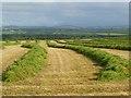 NY0944 : Farmland, Holme St Cuthbert by Andrew Smith