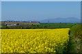 NY0937 : Farmland, Gilcrux by Andrew Smith
