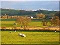 NY2242 : Farmland, Boltons by Andrew Smith