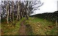 SE4599 : Arncliffe Wood by Scott Robinson