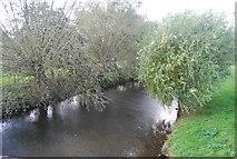 TG1508 : River Yare at Bawburgh by N Chadwick