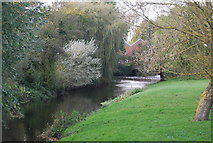 TG1508 : River Yare by N Chadwick