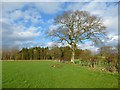 NY4436 : Pasture, Skelton by Andrew Smith